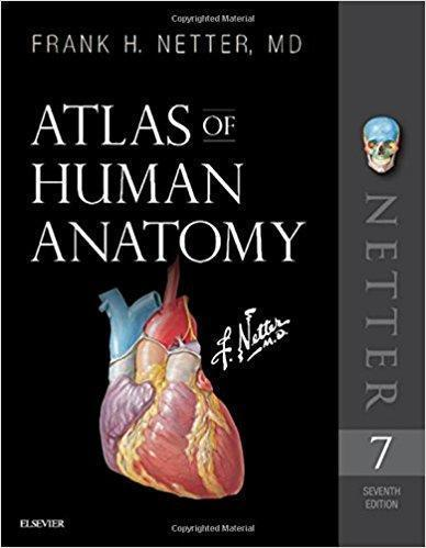 Atlas of Human Anatomy netter 7th Edition 2019 - آناتومی